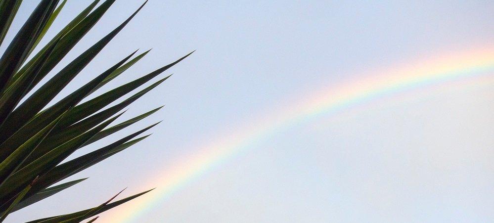 Rainbow in the sky near a palm tree